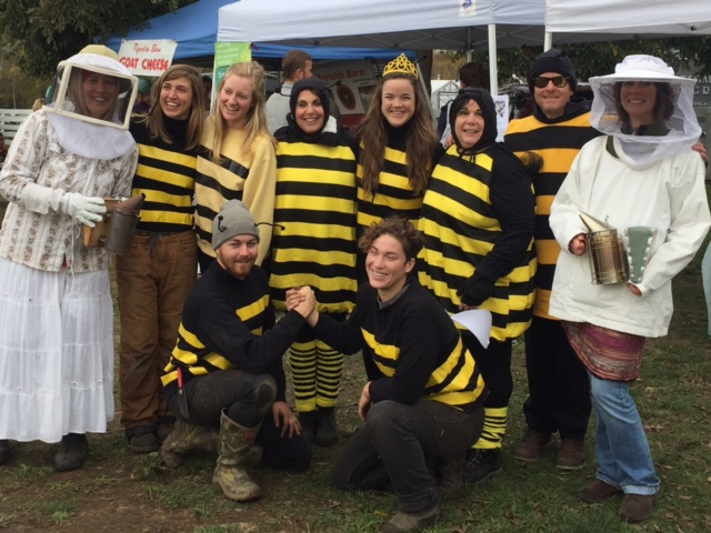11-5-16-market-bees
