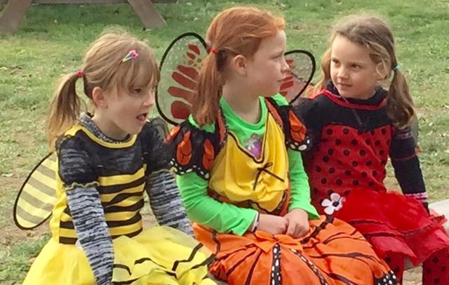 11-5-16-mini-bees